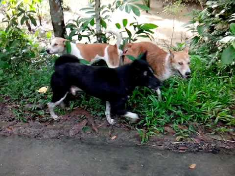 Dogs Sexual Behaviour Rate My Science