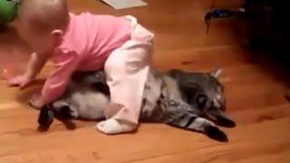 Kumpulan video lucu bayi bermain dengan kucing - paling lucu banget bikin ketawa