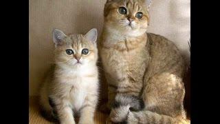 Очень смешное видео про кошек. Такие скромные и веселые кошки.
