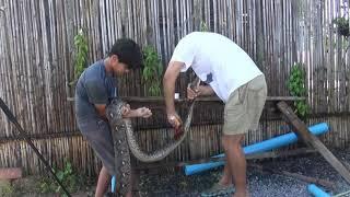tratamiento de serpiente herida