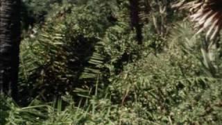 Sandokan-Der Tiger von Malaysia Folge 3 5/6