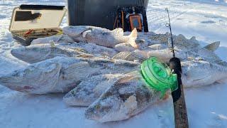 Попал на ВОЛШЕБНУЮ ЛУНКУ Нашел БОЛЬШУЮ СТАЮ СУДАКА И ОКУНЯ Рыбалка 2021 на ВОДОХРАНИЛИЩЕ