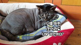 겁쟁이 고양이의 예방접종을 하면서  왜 집사가 눈물나는…