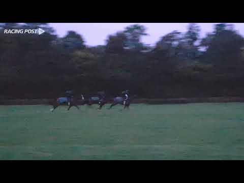 Zarak gallop