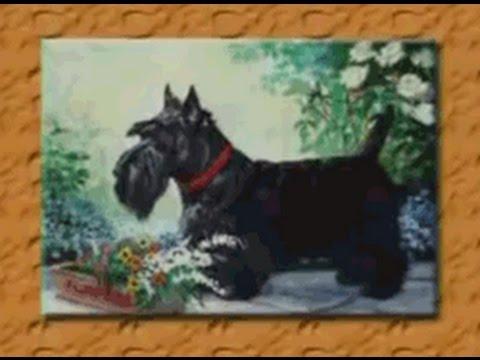 Породы собак. Шотландский (скотч) терьер и... силихем
