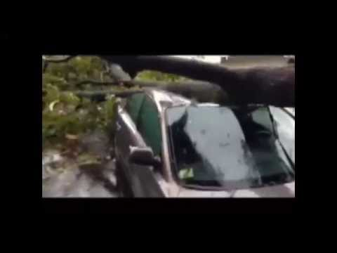 Strong winds knock down trees along South Shore - YouTube