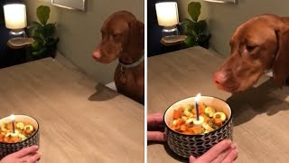 Smart dog successfully blows out her birthday candle