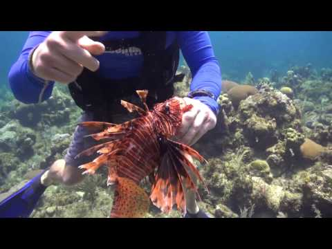 Roatan Marine Park Lionfish Management Program