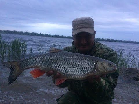 14 Рыбалка с Берега на Большой Реке Волге. Ловля Голавля на ...