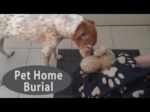 34+ Bury A Dog In Your Backyard Images - HomeLooker