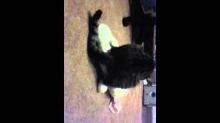 Мой кот насилует кролика(видео первае)