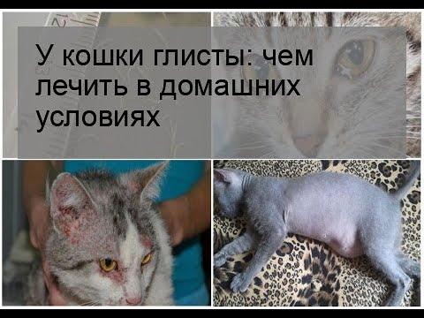 Как вывести глистов в домашних условиях у котенка