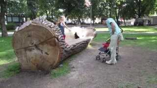 A Bench Made Of A Tree Trunk In Vilnius