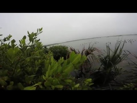 merritt island hunting