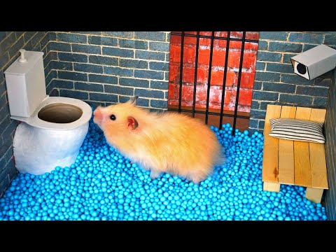 🐹 Hamster escapes the amazing maze! 🐹 Real life traps |