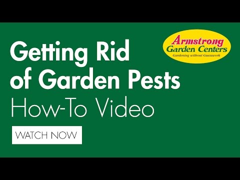 How to get rid of California's garden pests - Armstrong Garden Centers