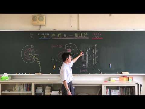【潘彥宏老師】基礎生物(上) 24 | 第三章動物的構造與功能  第四節 防禦