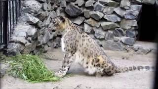 Животные в зоопарке 09.08.18