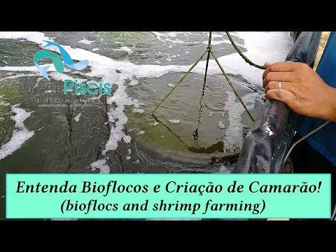 O Que é Bioflocos? Criar Camarão Em Bioflocos #1