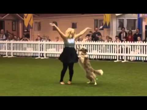 Canine Freestyle Let it Go from Frozen