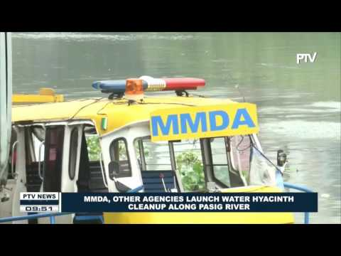 MMDA, other agencies launch Water Hyacinth Cleanup along Pasig River