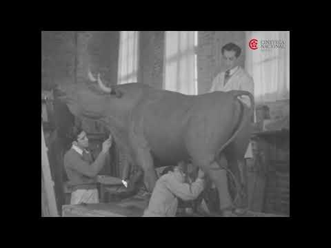 Hazaña monumental. Ciudad de los deportes. Alfonso Manrique. Año: 1945. Película de acetato, 16 mm.