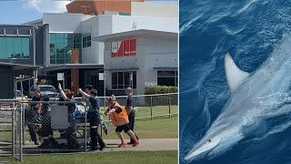 Man critically injured in Australia shark attack