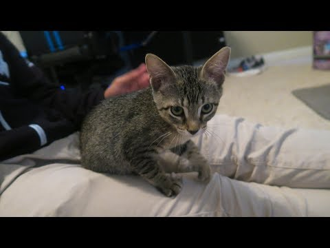 MY FIRST PET EVER!! (Dude The Cat)