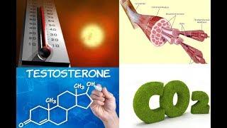 Бодитюнинг. День #24. От чего растут мышцы. Гормоны и мышечные клетки. Тестостерон. БТШ.