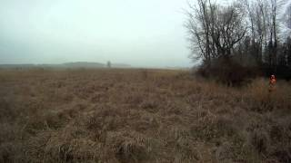 Pheasant Hunting With Beagle