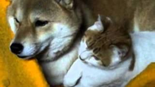 Кошка и собака живут вместе