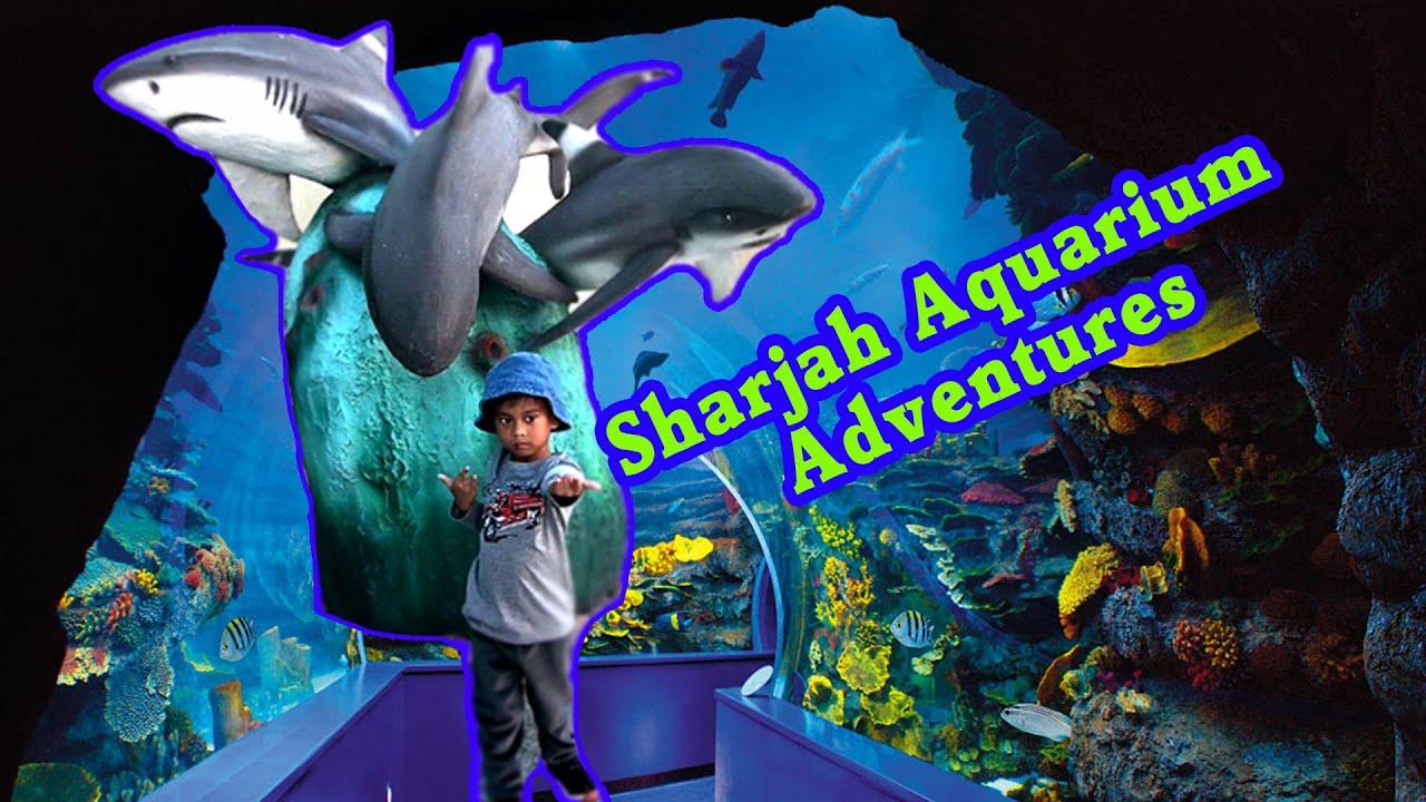 Sharjah Aquarium Adventure - YouTube