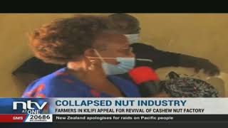 Farmers in Kilifi appeal for revival of cashew nut factory
