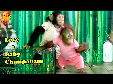 Love Two Baby Chimpanzee  @Samutprakarn Zoo