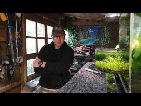 HOW TO BREED ZEBRA DANIO'S FROM SPAWN TO FREE SWIMMING