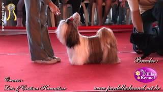 Show Dog Shih Tzu - Par Dellas Fergie   Kc Ipatinga   Miriam   Junho 2012 Hd Com Som