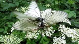 Секс с ночными бабочками. HD