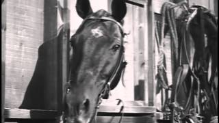 Fury THE 4-H STORY - Peter Graves TV WESTERN