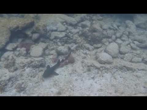 Smith's Cove - Grand Cayman Snorkel