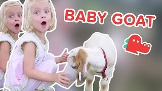 Baby Goats: Funniest Animal Videos, Clips & Compilation