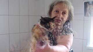 Впервые в Украине - бесплатная стерилизация домашних животных