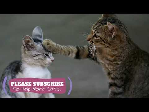 2 Hours  Relaxing Music for Cats! Help Your Cat Anxious or Restless with Music ☯LCZ37