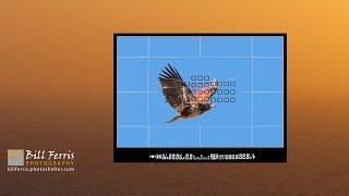 5 Minute Photo - Birds in Flight Camera Settings