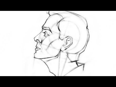 how-to-draw-the-head---side-view
