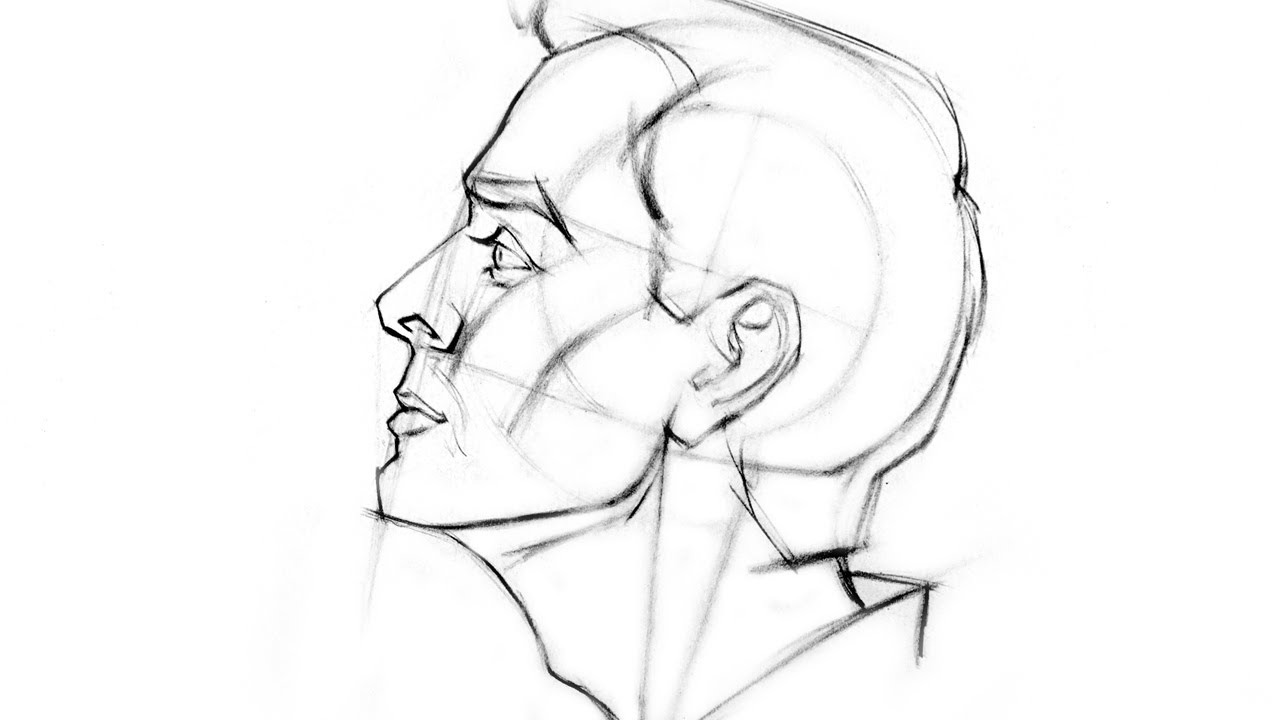 How To Draw The Head Side View Youtube