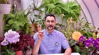 Обзор средств защиты растений для  открытого грунта на 2017г
