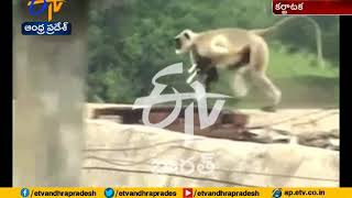 Monkey saving a small Dog  from a Pig Attack at Karnataka