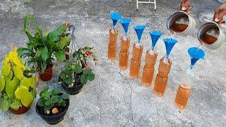 Como Deixar sua Planta Linda sem Gastar Dinheiro