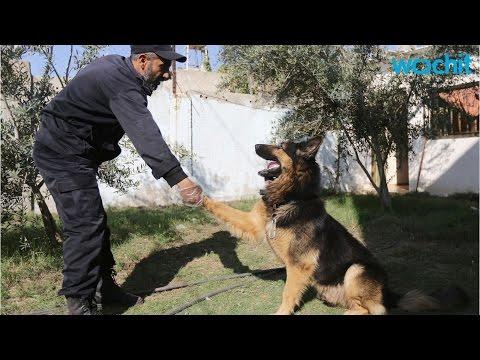 The Key to Training German Shepherd Puppies