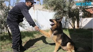The Key to Training German Shepherd Puppies